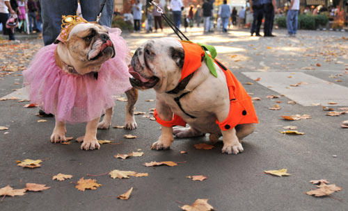 Canine Festival